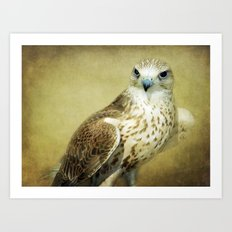 The Saker Falcon Stare Art Print