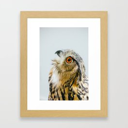 Eurasian Eagle Owl Framed Art Print