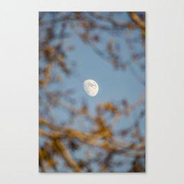 Moon Through the Trees Canvas Print