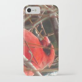 Chilly Cardinal 2 iPhone Case