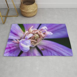 Closeup of a blooming purple clematis flower Rug