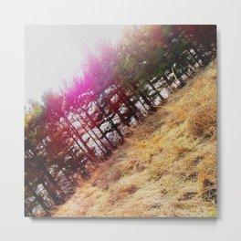 Sunny Evergreen Trees Metal Print