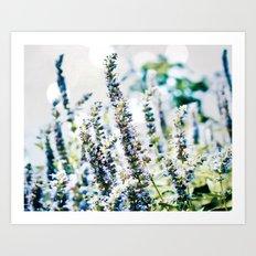 Fields of Blue Art Print