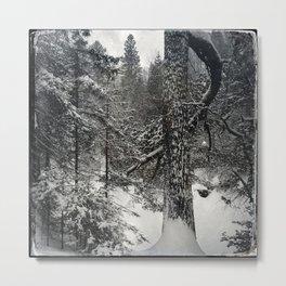 Winter white pine Metal Print