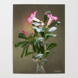 Spade's Desert Rose Poster