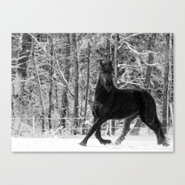 Friesian Mare in Snow Canvas Print