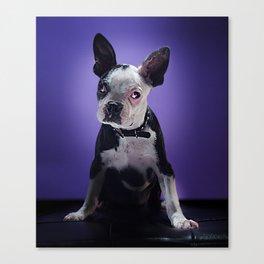 Super Pets Series 1 - Super Bugsy Canvas Print