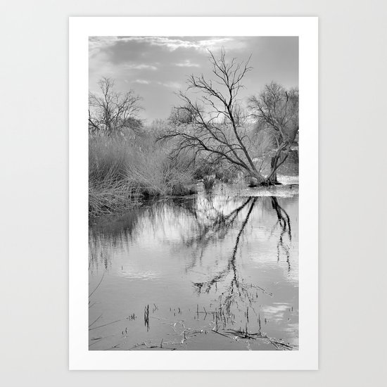 Branches that embrace the water Art Print