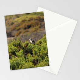 Barbary Ground Squirrel 2 Spain Stationery Cards