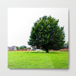 Windswept - Tree in field (Wiltshire, England) Metal Print