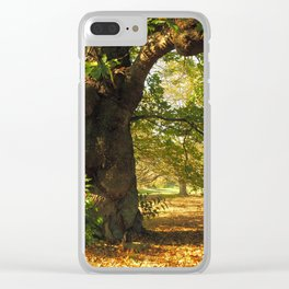 Shady old chestnut tree Clear iPhone Case