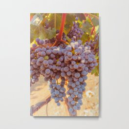 Grapevines 2 Metal Print