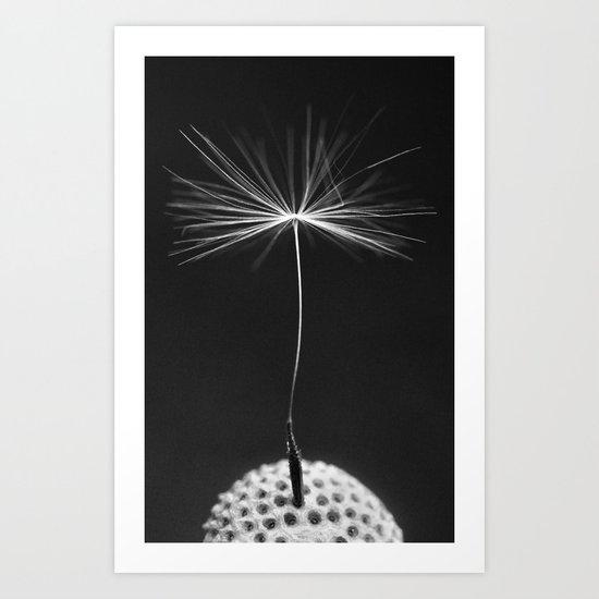Seed Of A Dandelion Art Print