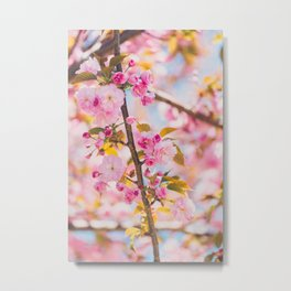 Cherry Blossoms I Metal Print