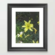 Yellow Lily DPGPA151014-14 Framed Art Print
