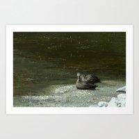 Ducks on the Shore Art Print
