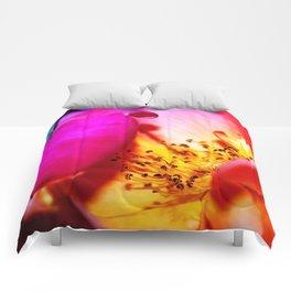 Rose Blush Comforters