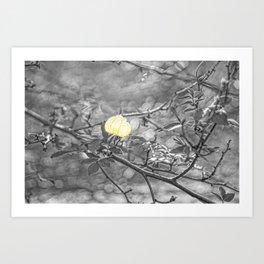 Hanging Faerie Lantern Art Print
