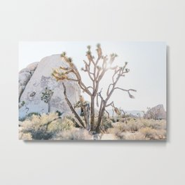 joshua tree in the afternoon sunlight Metal Print