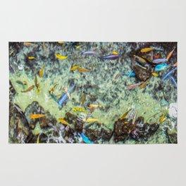 Electric Fish Pond Rug