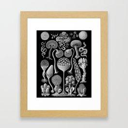 Slime Molds (Mycetozoa) by Ernst Haeckel Framed Art Print