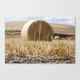 Wheat Bale Photography Print Canvas Print