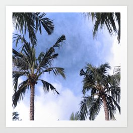 Palm tree views Art Print