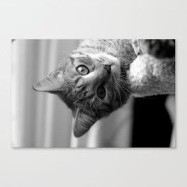 Tibbles Upside Down Canvas Print