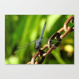 Nature Unchained Canvas Print