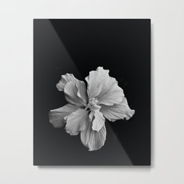 Hibiscus Drama Study - Black & White High Impact Photography Metal Print