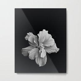 Hibiscus Drama Study - Black & White High Impact Photography Metal Print