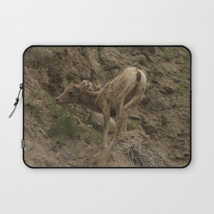 Baby Mountain Goat In Yellowstone National Park Wy Laptop Sleeve By Abbyhoffman