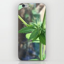 Cannabis Cluster iPhone Skin