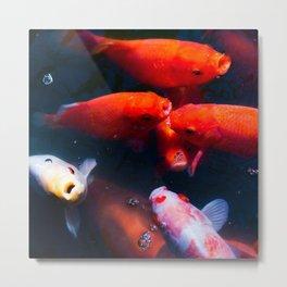 Koi Pond | Nature Animal Photography of Colorful Koi Fish in Pond Metal Print