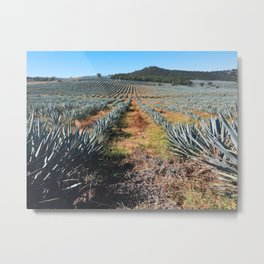 Agave Field | Jalisco, Mexico Metal Print