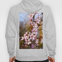 Almond Blossoms in Spring Hoody