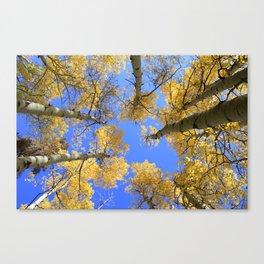 Aspens Skyward Canvas Print