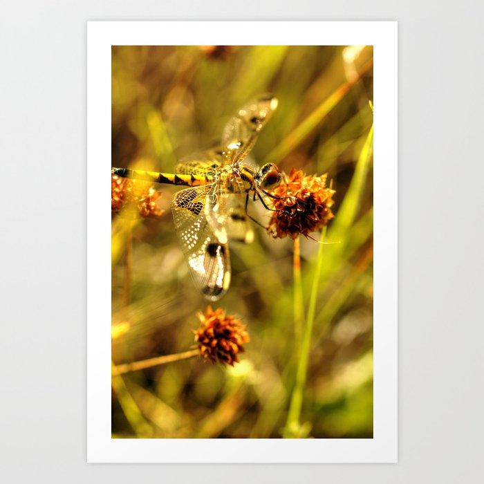 Black-tailed Skimmer Dragonfly Art Print