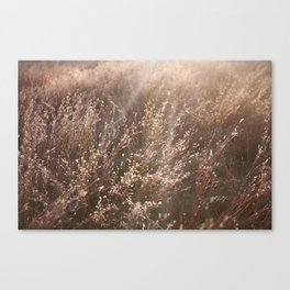 Field's of Rose Gold Canvas Print