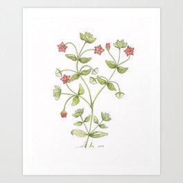 Scarlet Pimpernel Watercolor Art Print