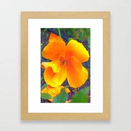 poppy orange Framed Art Print