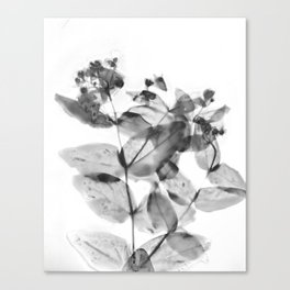 Ghostly Blooms Canvas Print