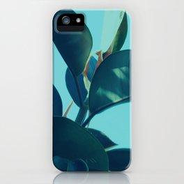 Sunlit Ficus Plant iPhone Case