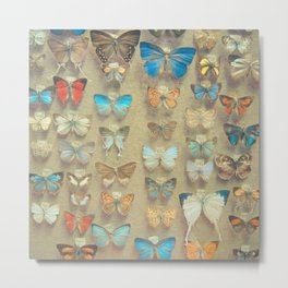The Butterfly Collection II Metal Print
