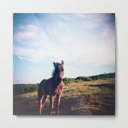 Dartmoor Pony Portrait (3) Metal Print