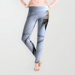 Clydesdales Leggings