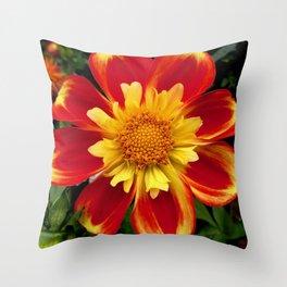 Sunburst Zinnia Throw Pillow