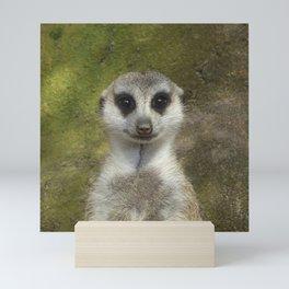 Funny Meerkat Mini Art Print