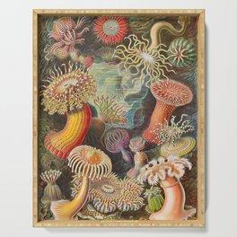 Ernst Haeckel Sea Anemones Vintage Illustration Serving Tray