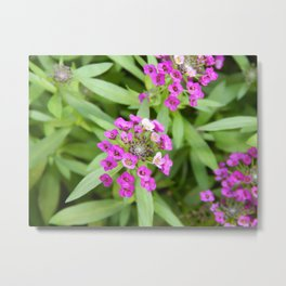 Little Purple Metal Print